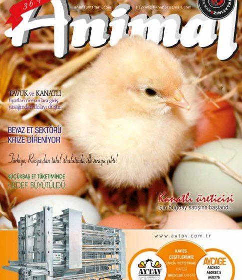 Eylül 2021 Dergi